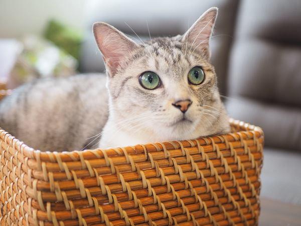 夏涼しくて冬温かい!猫大喜びの「猫ちぐら」ってなに?
