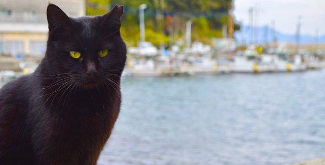 猫の島「青島」おすすめスポット、観光に行く時のマナー