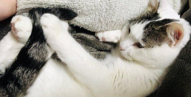 視界から消えても認識できる!?猫の驚くべき『認知能力』3選