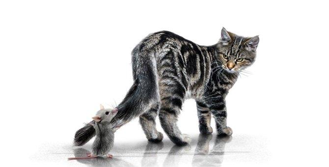 猫はねずみに騙された?干支に猫年がないのはなぜか3つの説