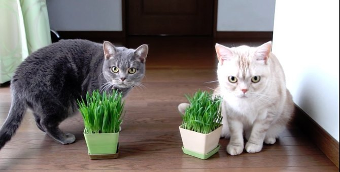 猫草から学ぶ褒め術