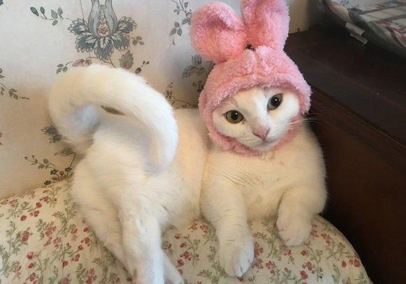 猫が『セクシーポーズ』をしちゃうのはどうして?