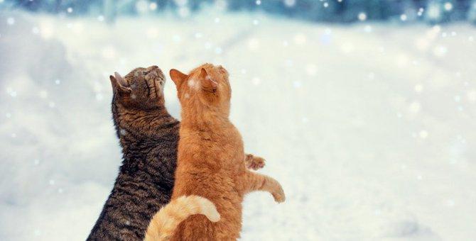 猫が二本足で立つのはどんな時?