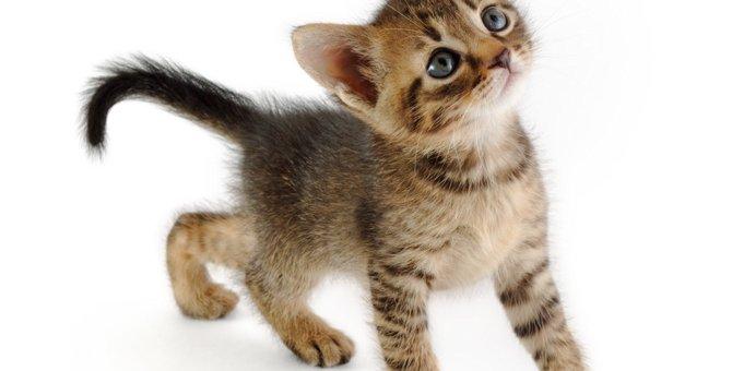 猫が毛玉を吐かない場合は注意が必要!病気とその対策