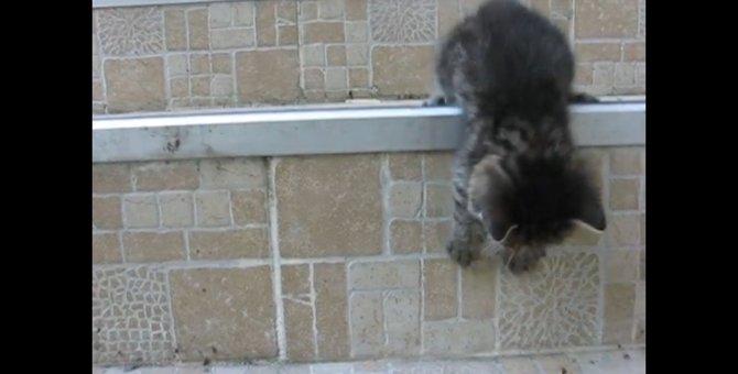 短すぎる子猫の冒険!勇気を出して階段を降りてみたけど…