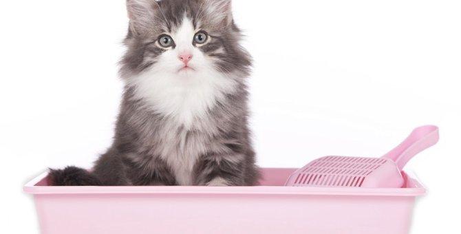 猫のうんちで分かる健康状態と病気の有無