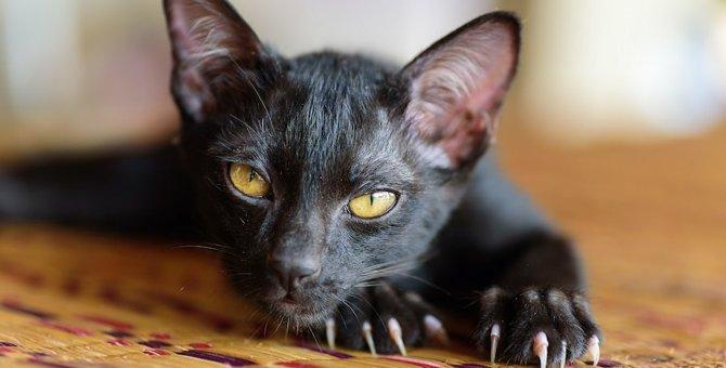 猫に引っ掻かれやすい人の特徴5つ