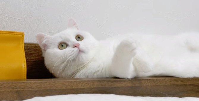 白過ぎてシーツと同化!雲隠れの術を取得した猫さん