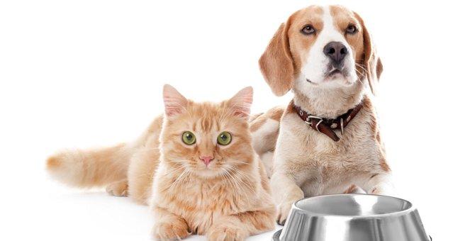 猫が『ドッグフード』を食べると危険な理由3選!犬猫の両方がいる家ですべき対策とは?