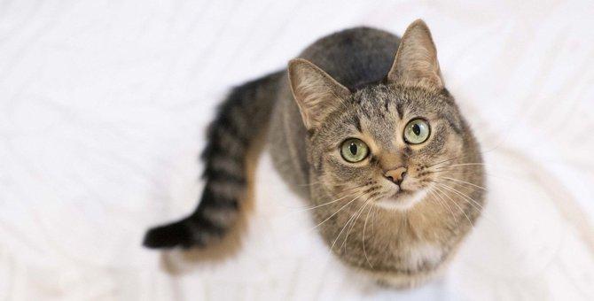 猫の平均寿命は?愛猫に『長生き』してもらう3つの方法