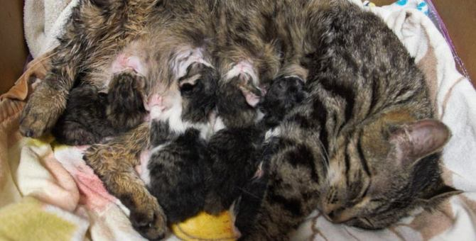 保護猫は妊婦ちゃんだった!愛猫ココと家族のハプニング物語