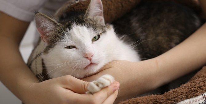 猫の9歳を人間に例えると?かかりやすい病気や食生活