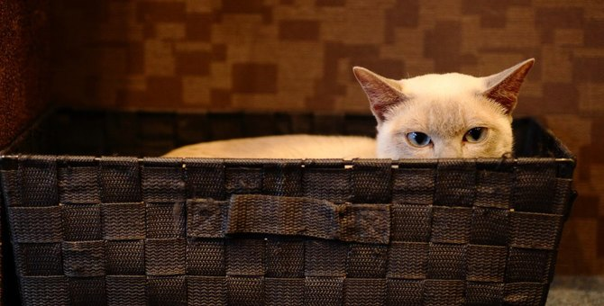 猫が『納得していない』ときの仕草3つ