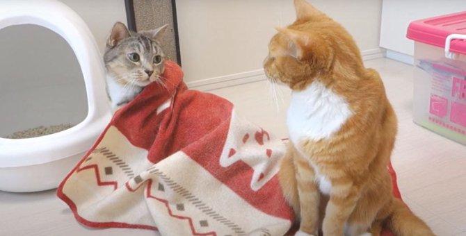ブランケットの中に潜り込む猫ちゃん!ゆっくり出てきてみると…
