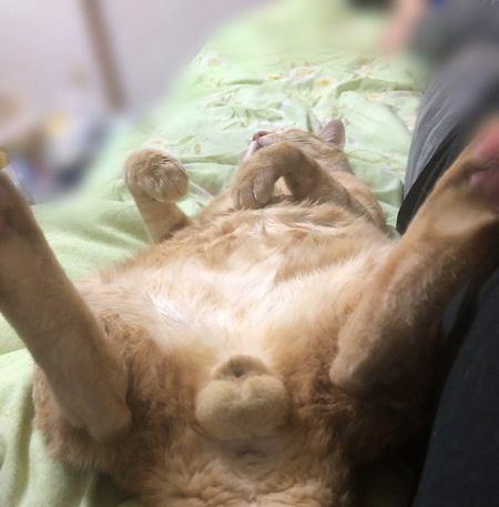 猫の「タマタマ」に関する豆知識5選