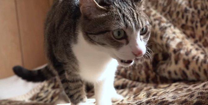 キレイ好きな猫ちゃん!寝床探しの最中に思わずフレーメン反応!
