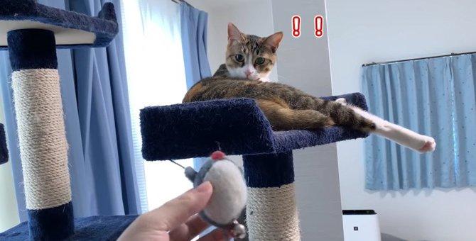 飽きたオモチャもこの通り♪猫あるあるも発動