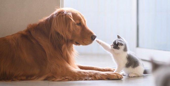 犬アレルギー、猫アレルギーに違いはある?対策の方法