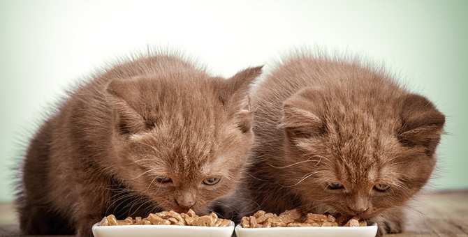 子猫のご飯の与え方と時期別の内容