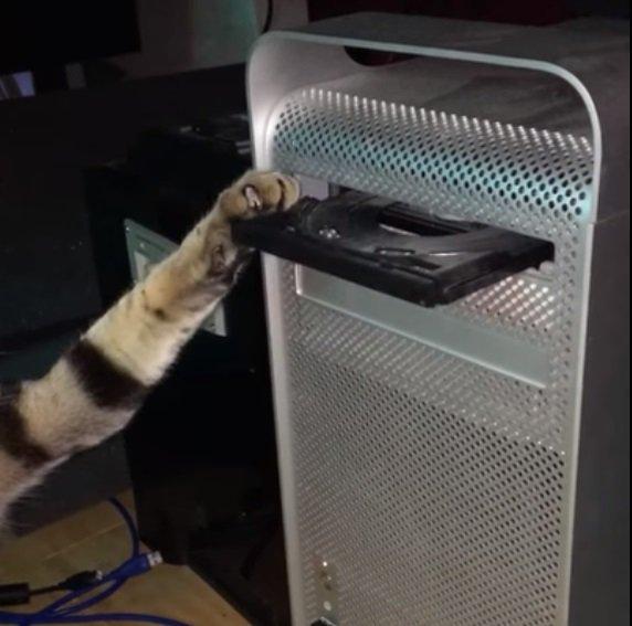 「そのDVDちょっと待った」ディスクトレイ、猫ちゃんの手で閉じられず