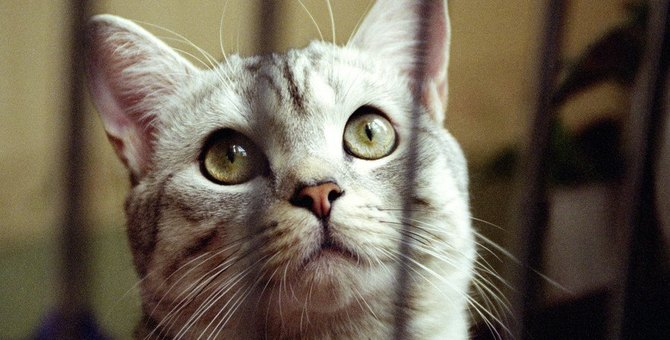 猫のケージはいつまで必要?撤去するタイミングも解説