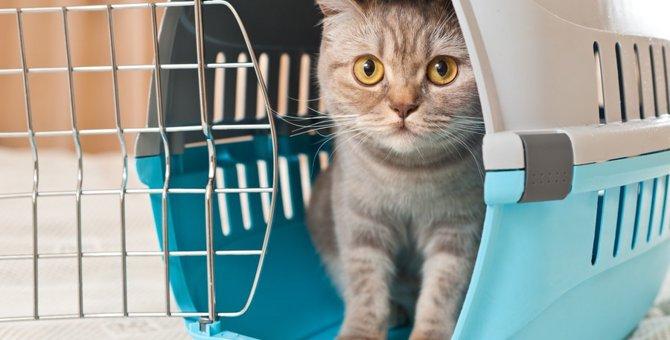 猫ちゃんのお留守番。初めてペットホテルを利用して