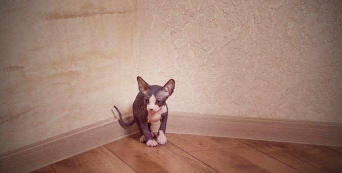 猫の粗相が治らない5つの原因と対処法
