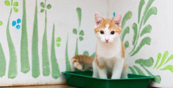 猫のトイレ掃除をサボると陥る4つの弊害