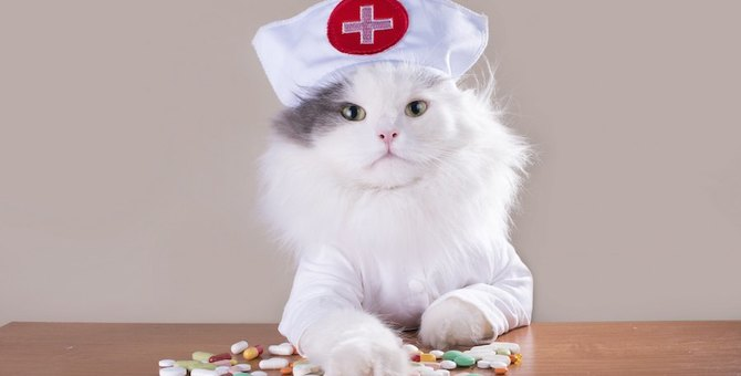 猫カゼにサプリが効く!は本当か?『L-リジン含有サプリ』は効く?