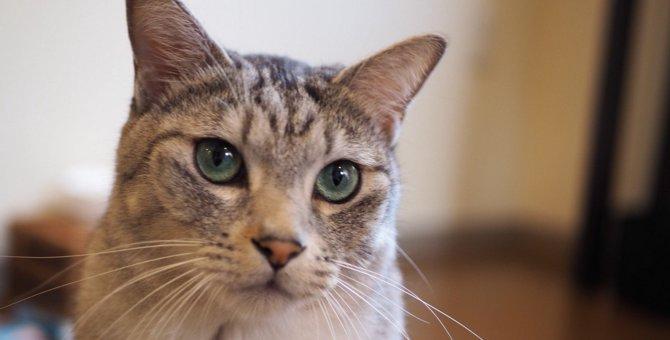 猫にとっての『理想の暮らし』とは?3つの条件や生活のコツを解説