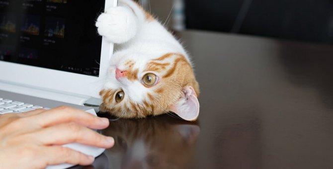 飼い主が何かに集中していると『邪魔をしてくる』猫の心理