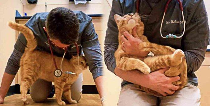 ひどい怪我で安楽死寸前の野良猫…獣医師が下した決断とは?