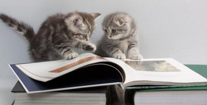 「ねこの絵本」大人も子供も楽しめるかわいい本をご紹介!