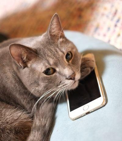 あなたの愛猫もしてる?猫にされがちな『イタズラ』5つ