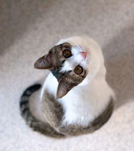 猫に愛を実感してもらう方法5つ