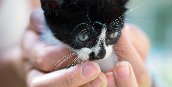 外から子猫の声…野良猫の子猫が迷子になっていた時の対処法