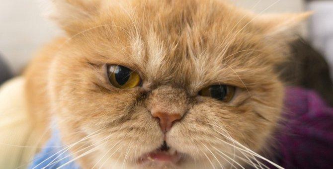 イタズラを止めたい!猫に「ダメ」を教える方法3つ