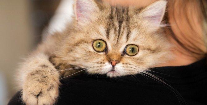 体調不良の危険も?猫が『無駄鳴き』をする5つの原因と対策