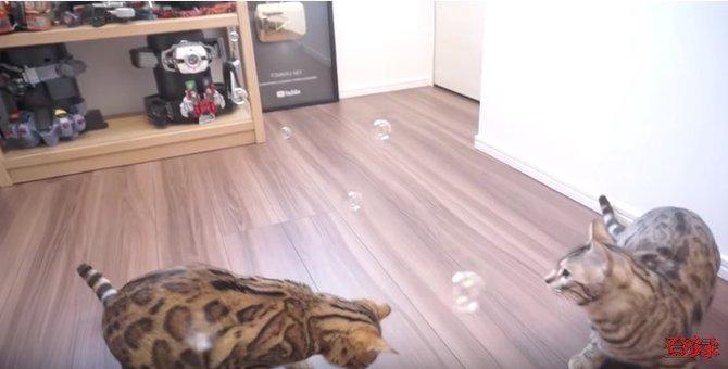 初めてシャボン玉を見た猫たちが可愛い♡