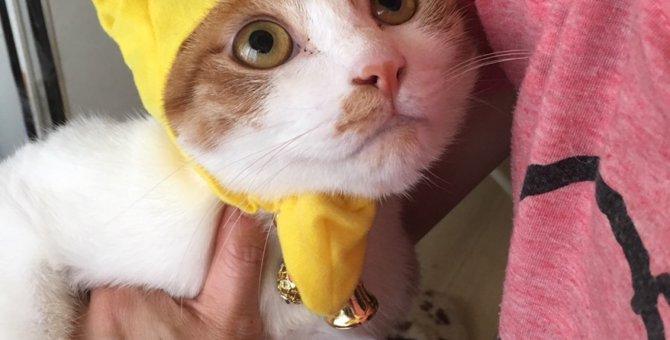 猫が飼い主を『じっと見てくる理由』と『目をそらす理由』