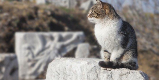 歴史の陰にニャンコあり?! 勇敢な猫たちの物語
