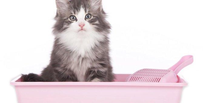 猫が血尿になる3つの原因