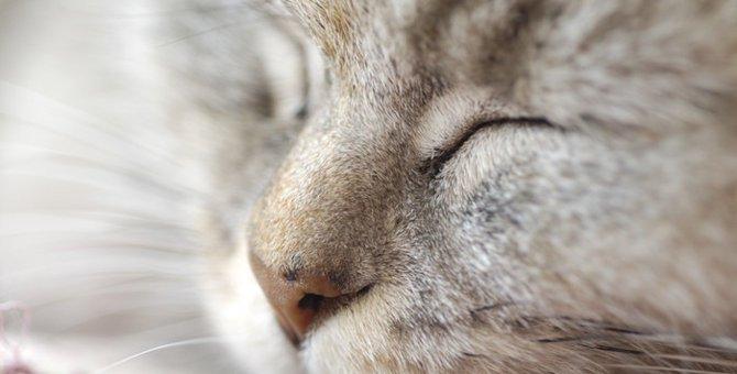 猫が鼻を「フンフン」鳴らす理由と注意すべきこと