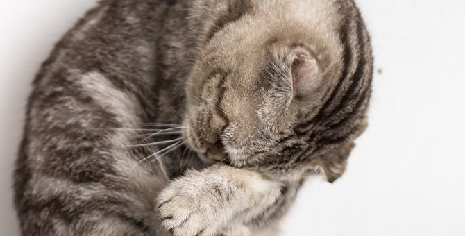 猫が『孤独』を感じているときに表れる変化5つ