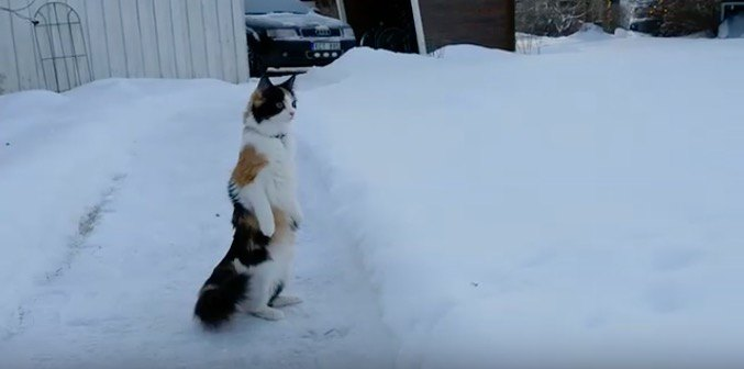 人間?雪原に仁王立ちをする猫ちゃん