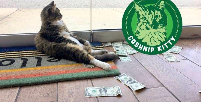 オフィス猫の周囲にはいつもお金が散乱している?!その理由は…