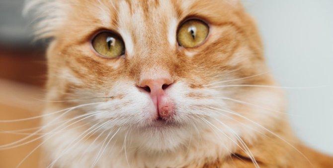 猫に斑点ができる原因や考えられる病気
