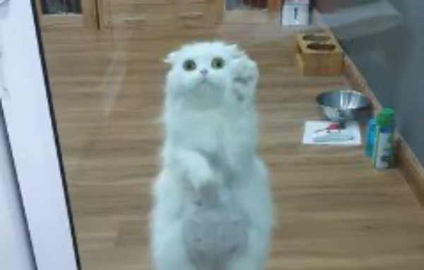 白猫がガラスの向こうで交通整理?華麗なバレエジャンプも!