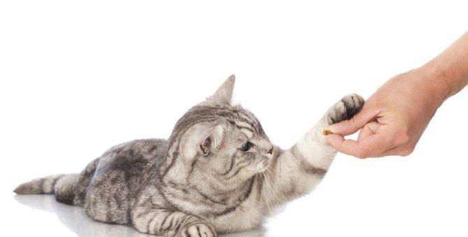 猫に「お手」を教えるために大切な3つのポイント