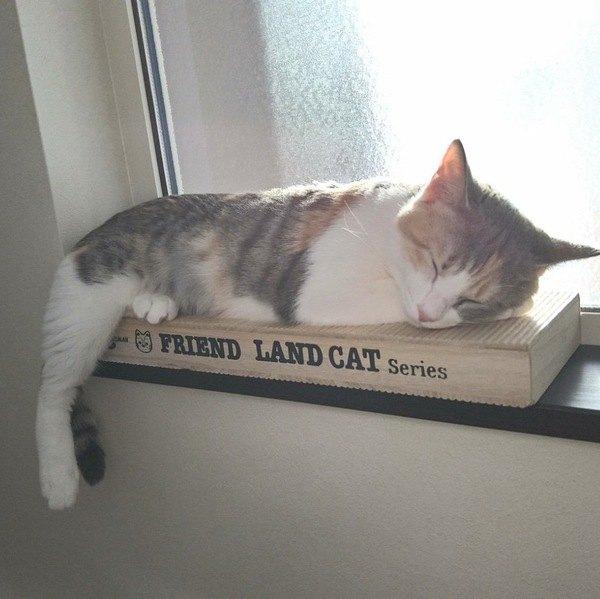 猫の『寝相』が示す意味と気持ち5つ